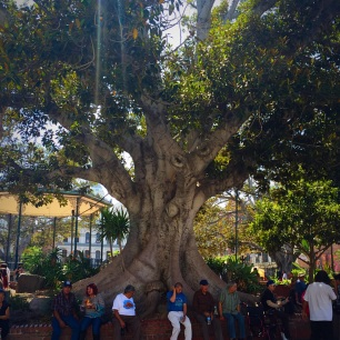Plaza tree
